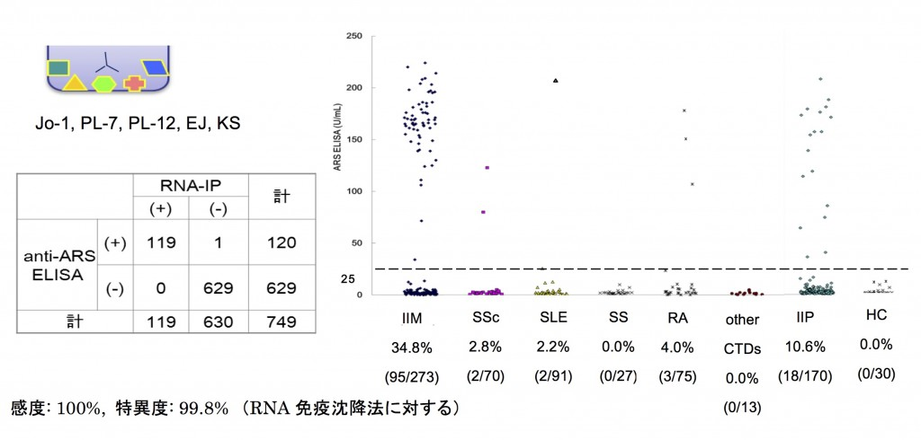 抗ARS抗体ELISAの陽性率